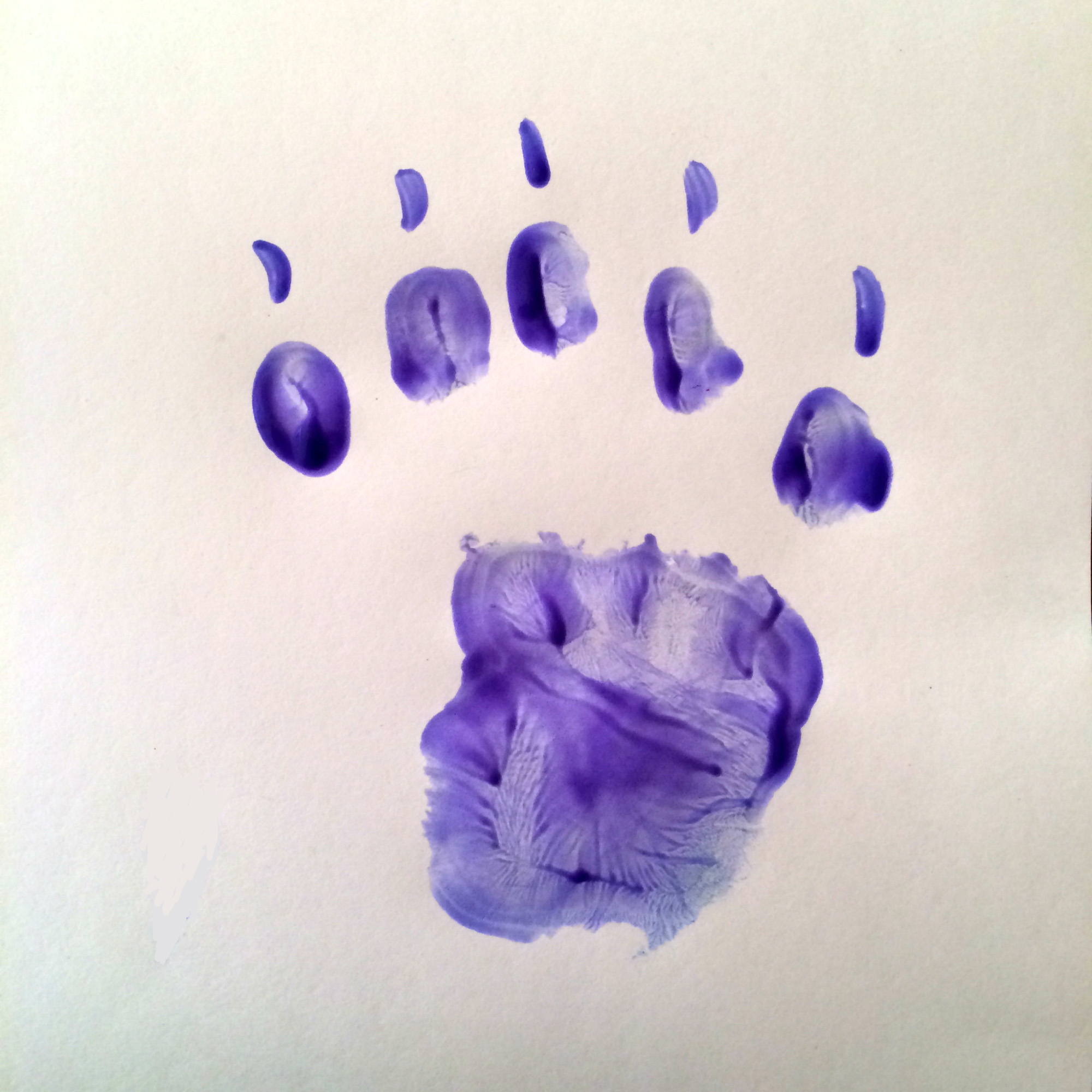 learning about animals animal track hand prints left brain