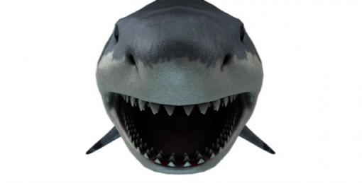 10 Shark Week Activities