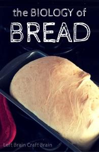 the Biology of bread left brain craft brain