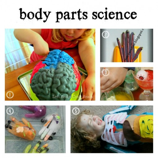 Body Parts Science Left Brain Craft Brain