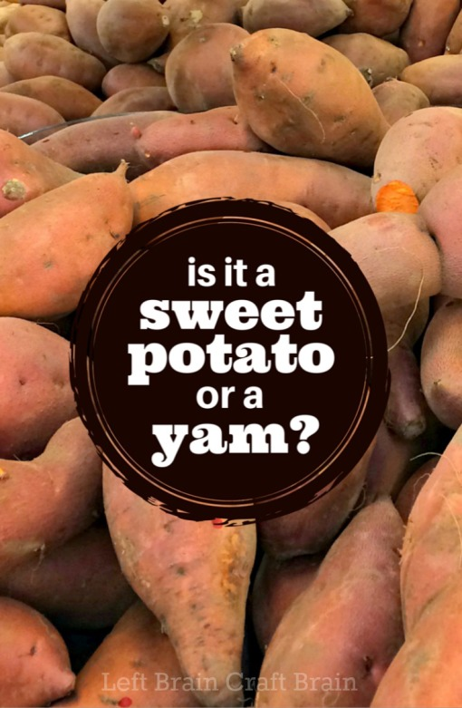 is it a sweet potato or a yam Left Brain Craft Brain