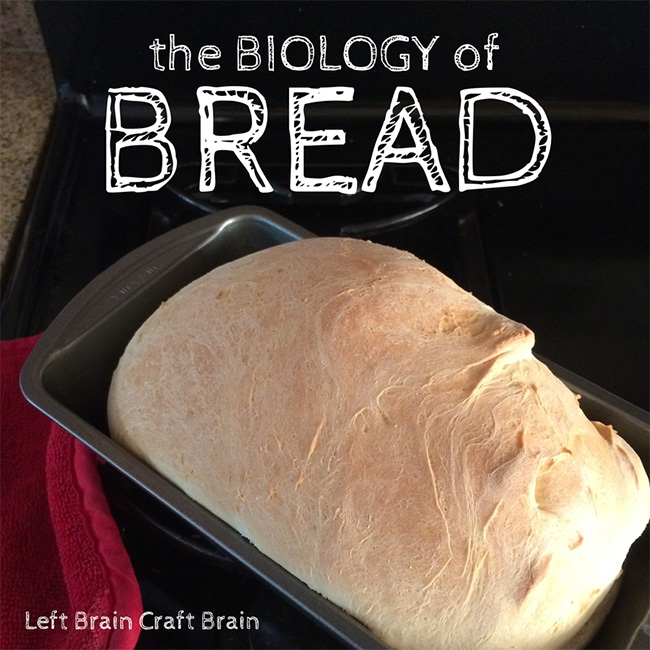 Biology of Bread Left Brain Craft Brain FB