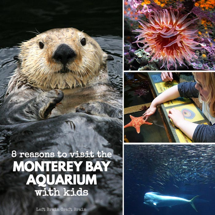 8 Reasons to Visit the Monterey Bay Aquarium with Kids FB