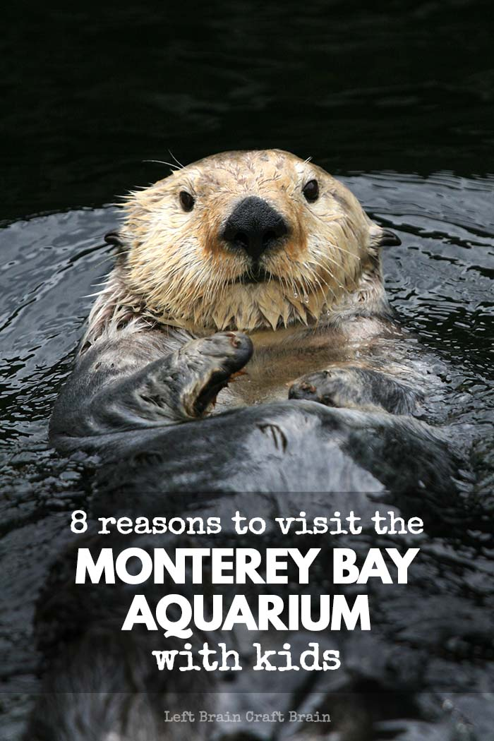 From otters, to hands-on science to 28,000 sardines, the Monterey Bay Aquarium has all sorts of cool things that kids will love.
