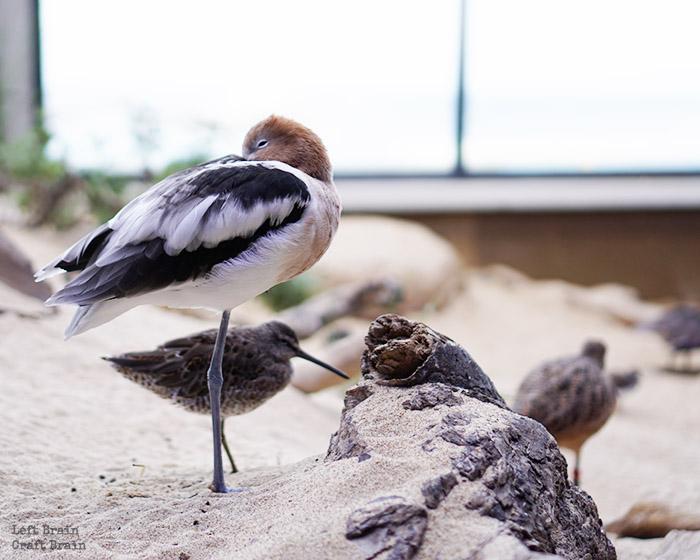 Aquarium Birds 2