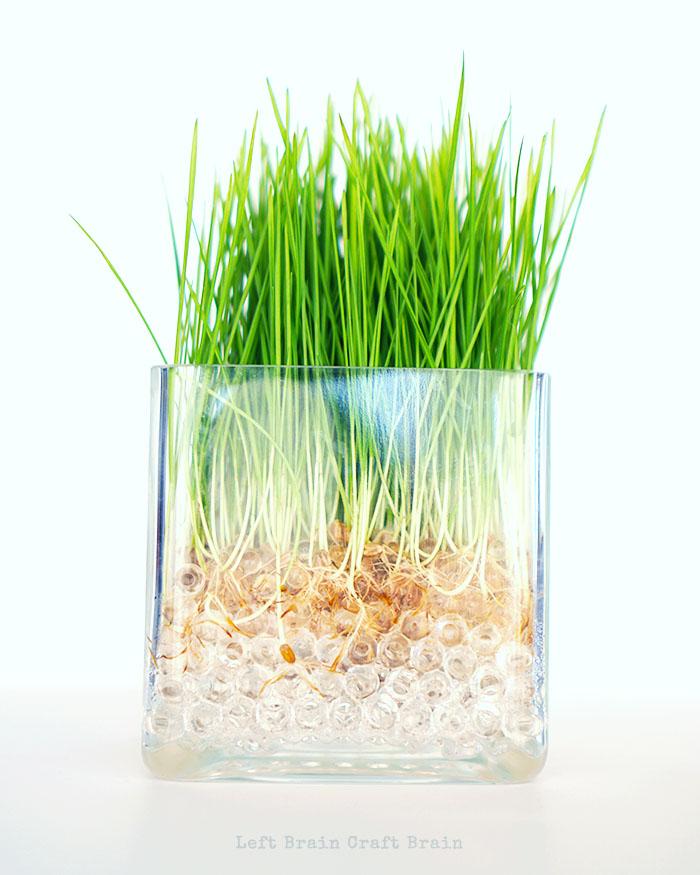 Wheatgrass on White Left Brain Craft Brain