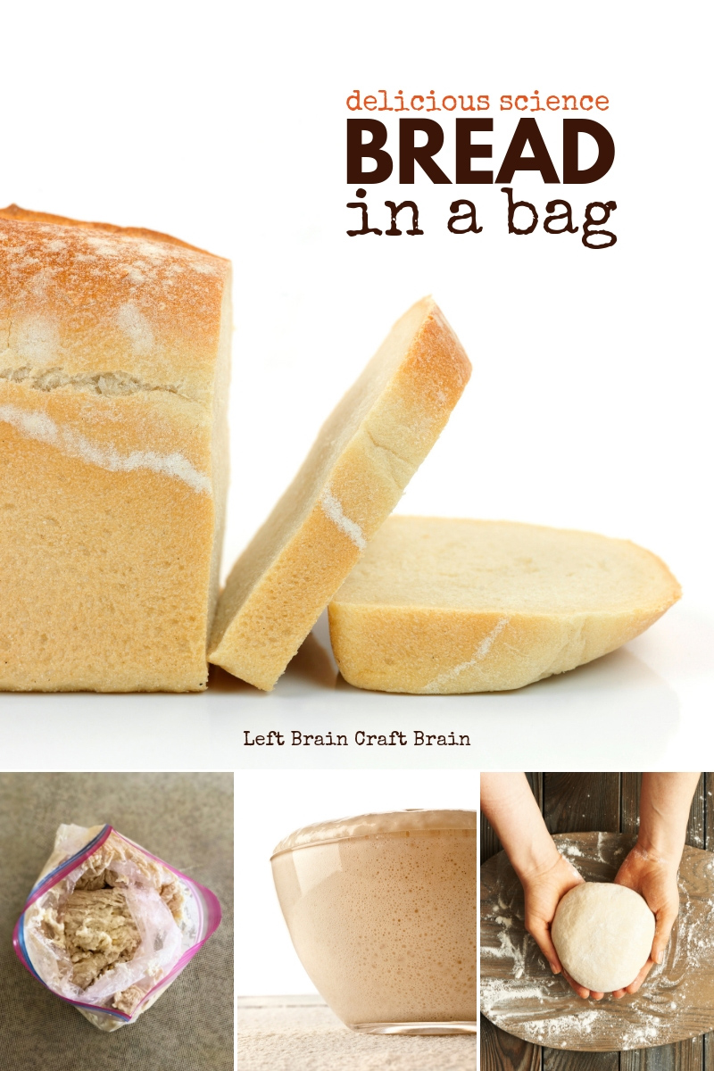 What better way to learn about science than by eating it? Especially if it's delicious. Like this yummy, Bread in a Bag recipe. Kids can learn why bread rises and feel the pride of making bread the whole family will want to eat! It's easy to make, too! This includes both a recipe and a partner yeast science experiment.