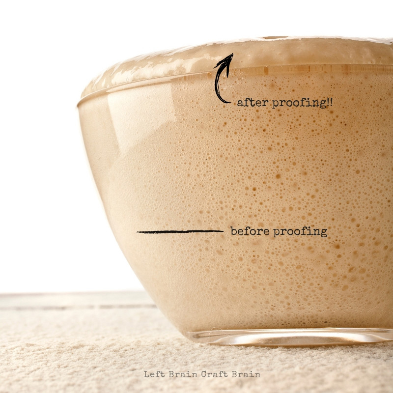 bread science: yeast proofing in bowl in this yeast science experiment