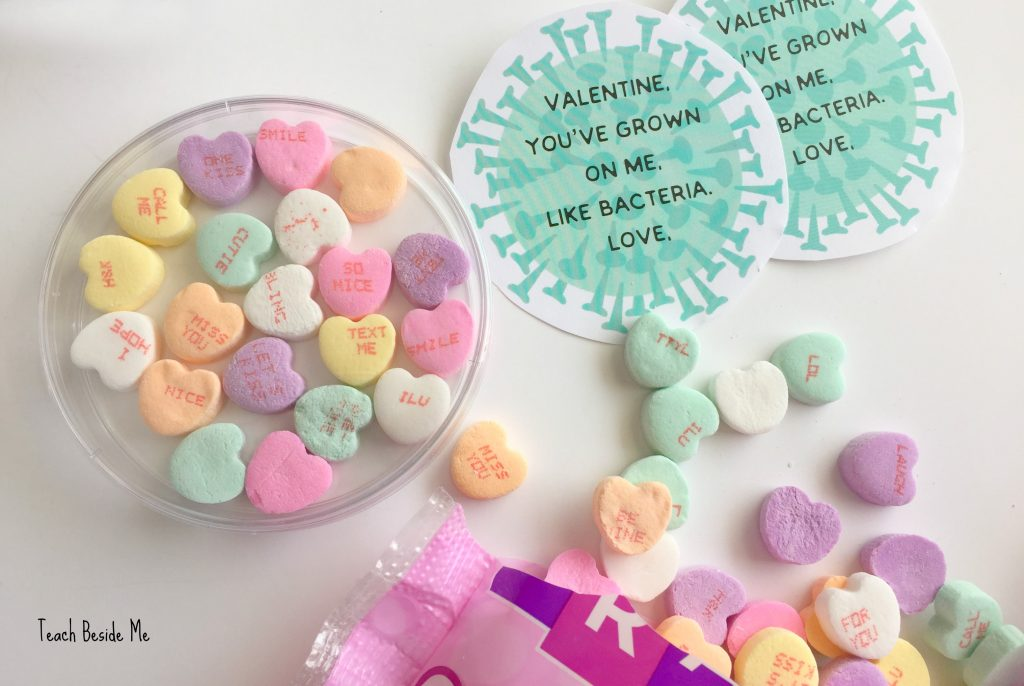 bacteria Valentines in petri dishes