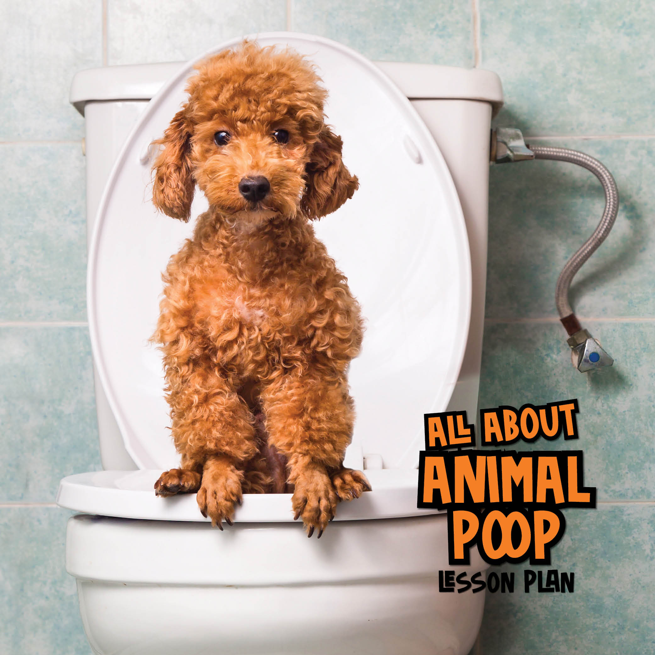 all about animal poop lesson plan brown poodle sitting on toilet