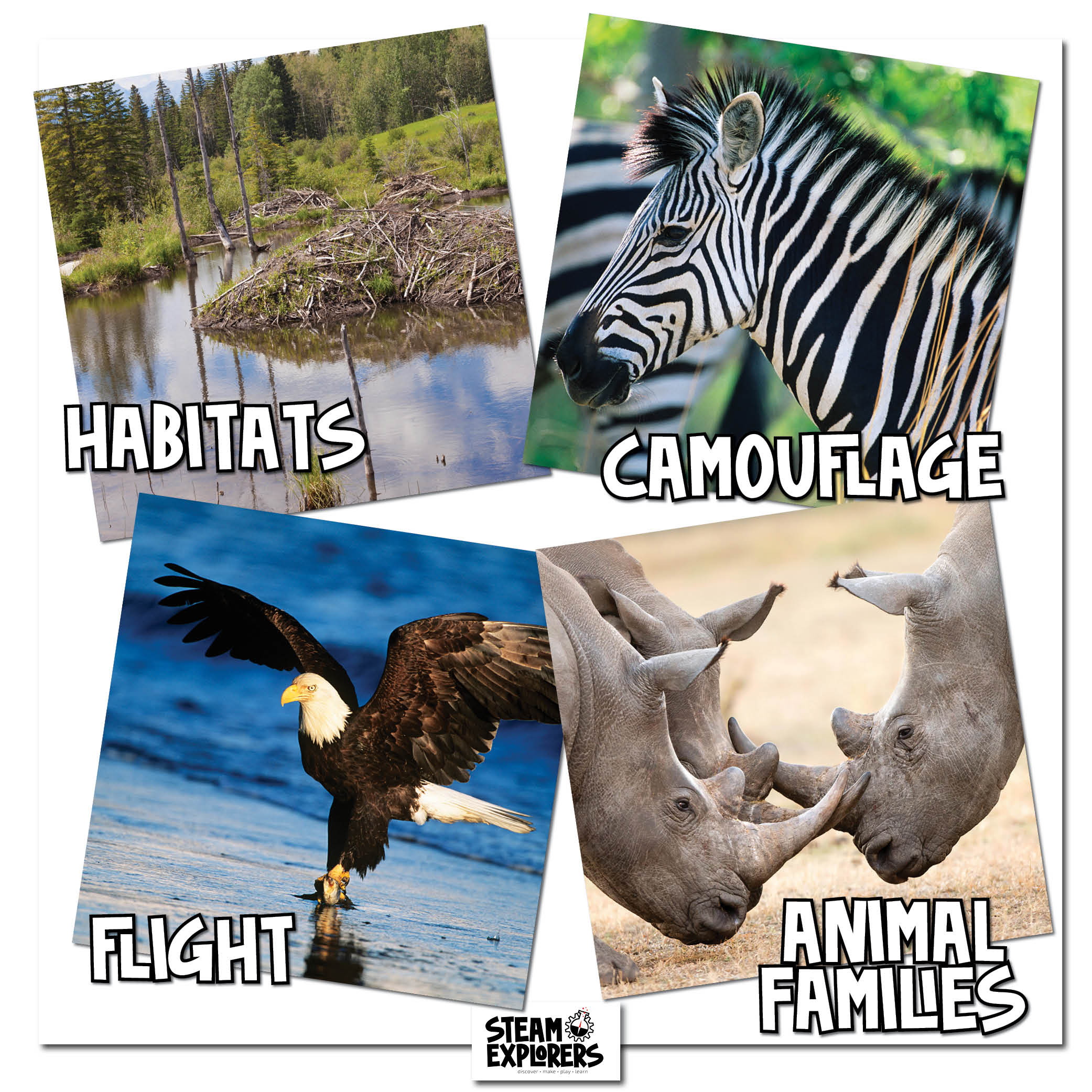 Animals Book Themes