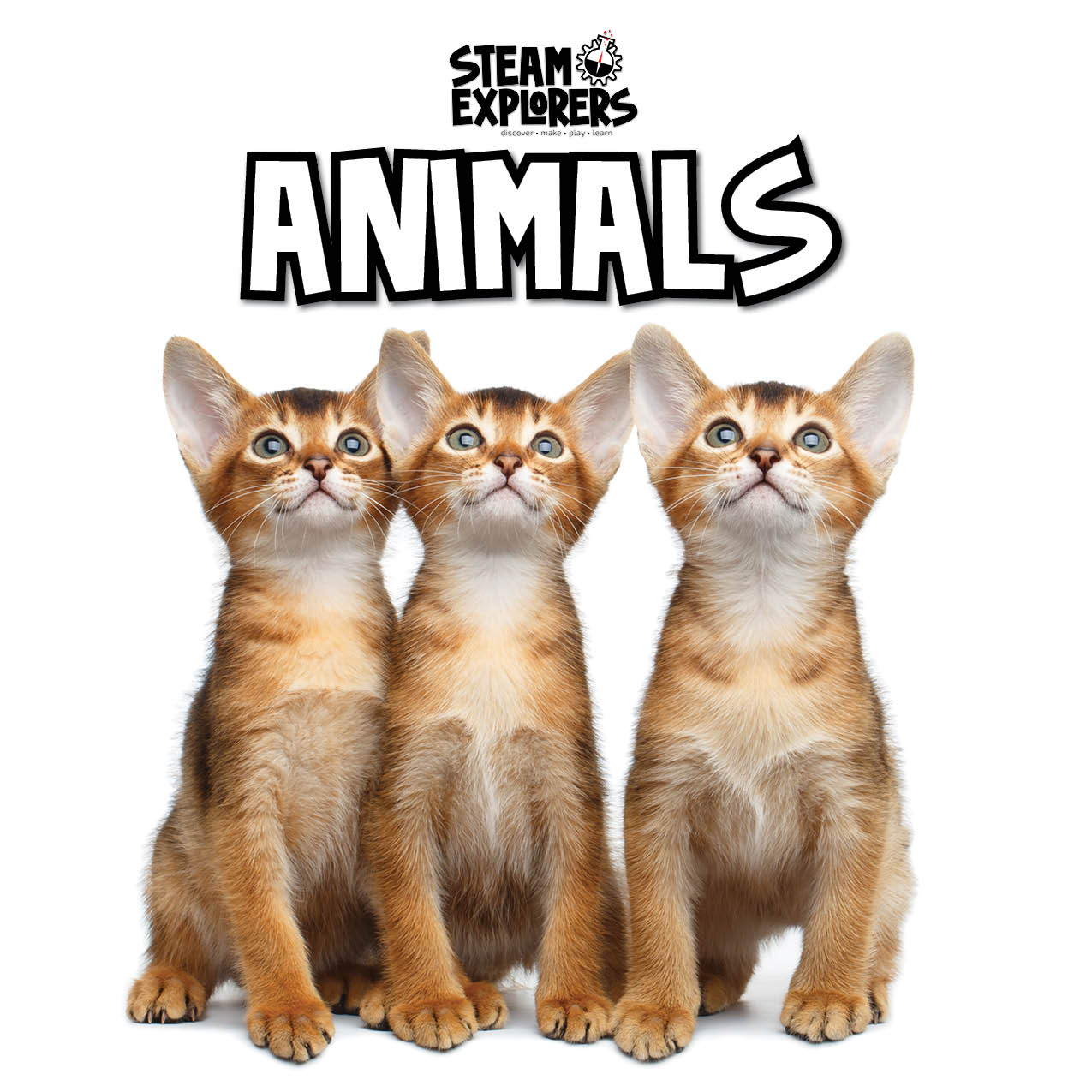 Animals Header 2000x2000