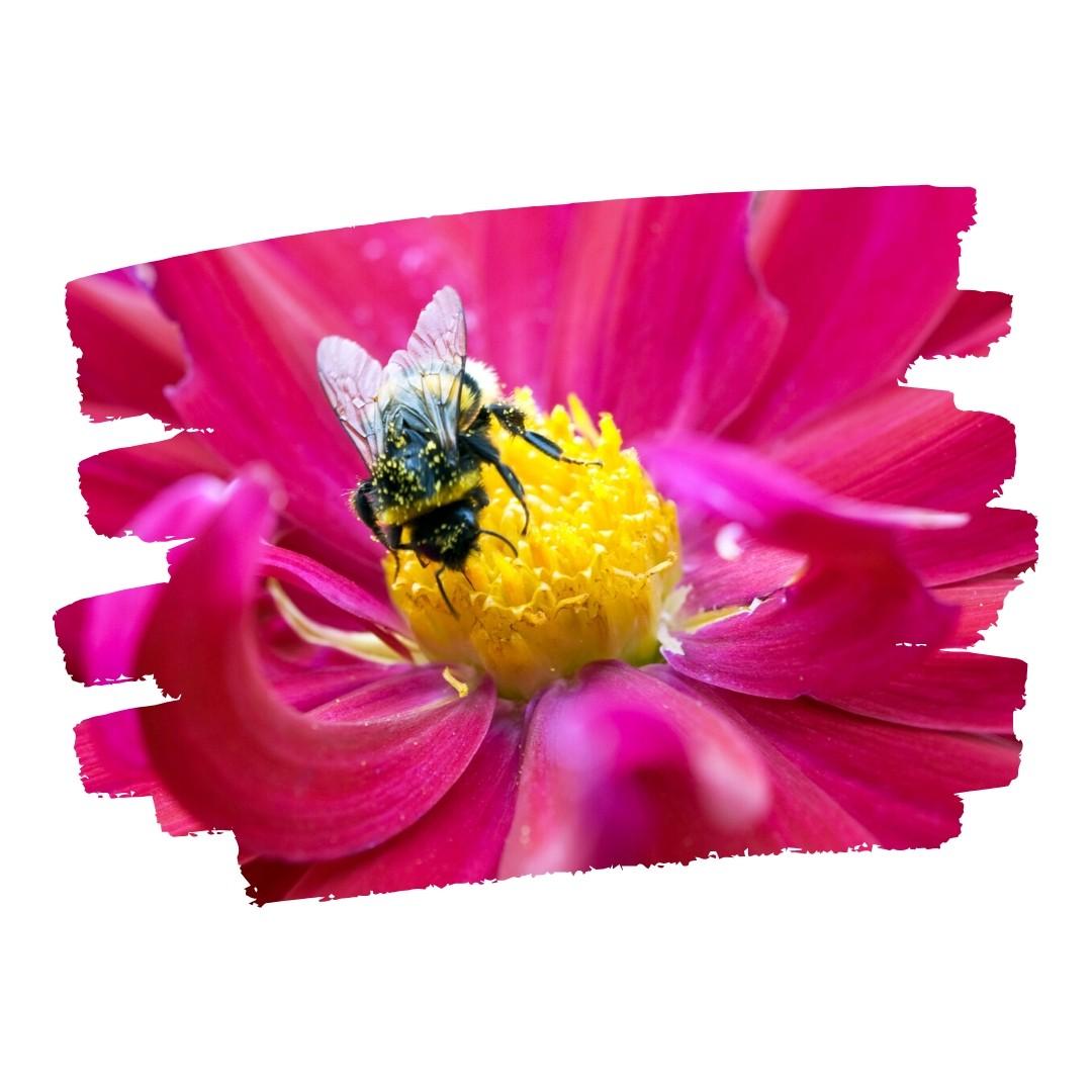 Bee in Paint Swipe Portal Image 1080x1080