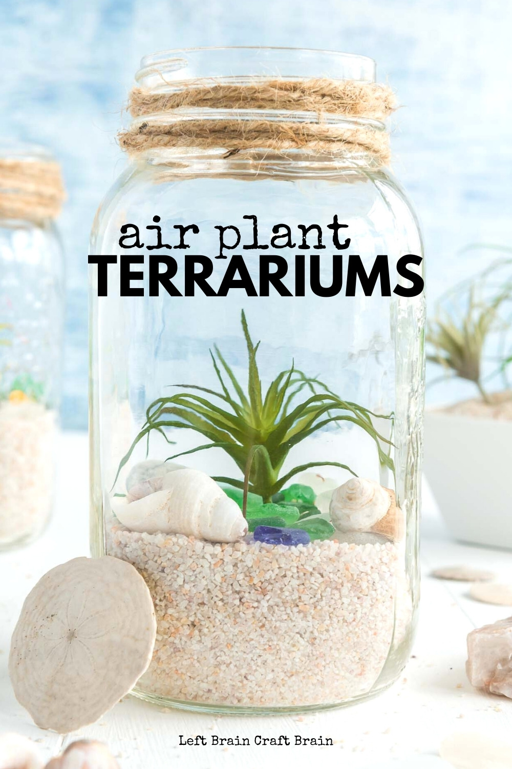 Air Plant Terrariums are fun projects for kids and adults. They're beautiful ways to decorate your home and learn about nature. They make great gifts too.