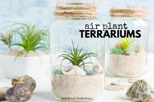 Air Plant Terrarium 680x450