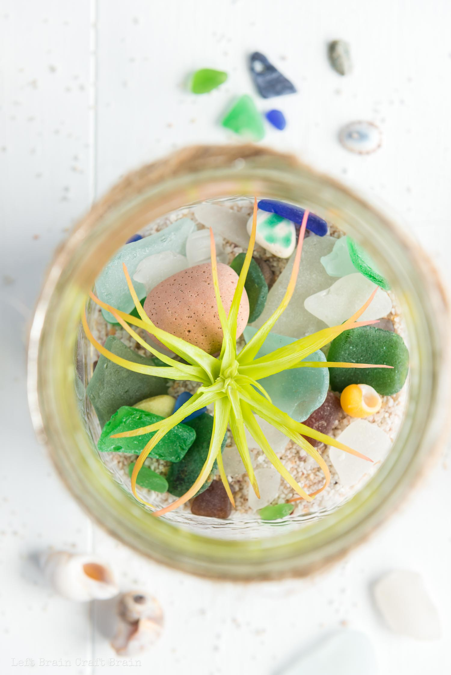 overhead closeup of air plant in jar on rocks and sea glass