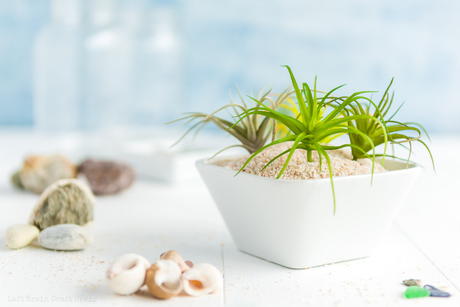 closeup of a bowl filled with sand and tillandsia air plants