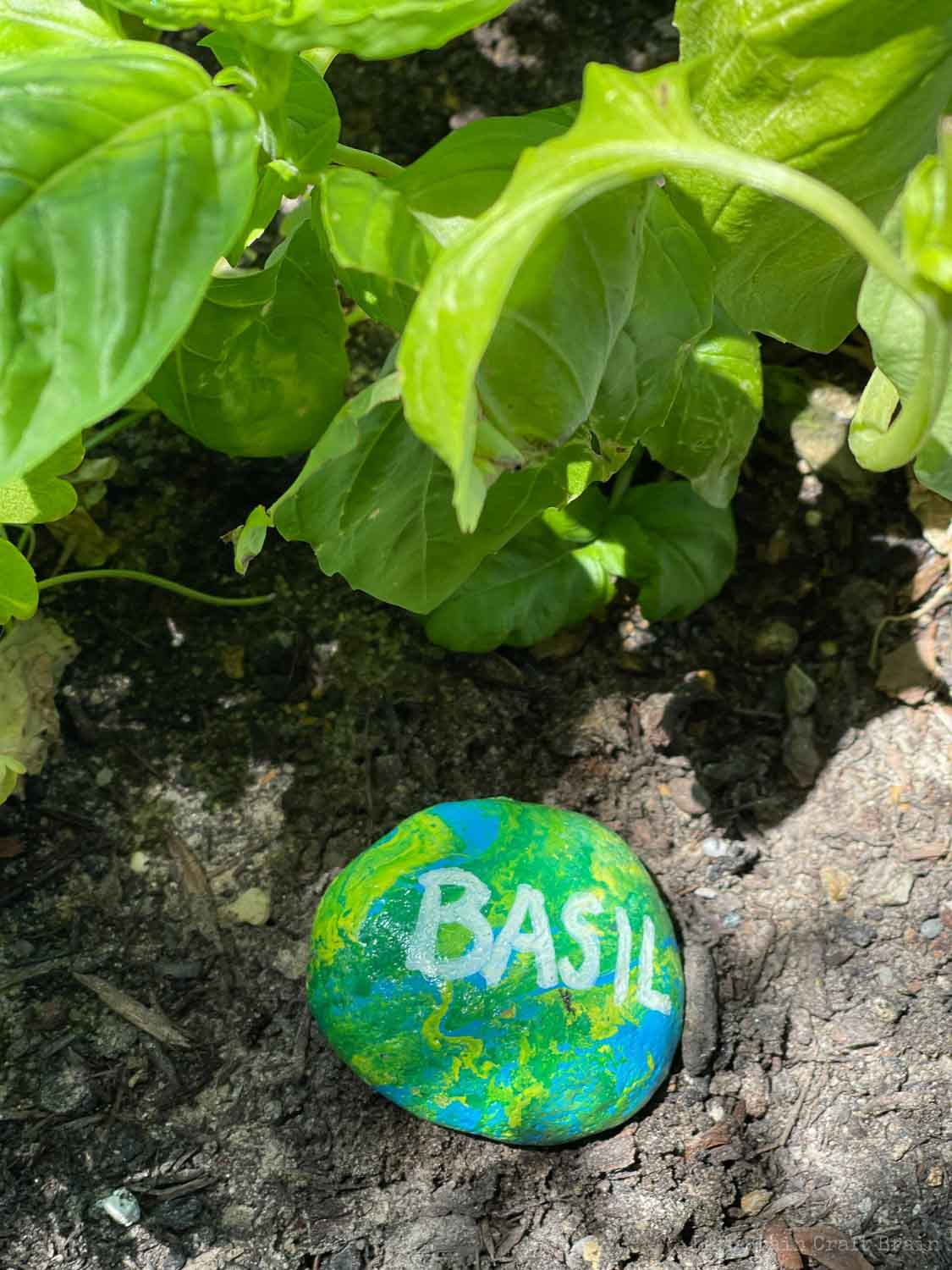 green and blue and yellow painted rock in soil basil pour painted rock garden markers